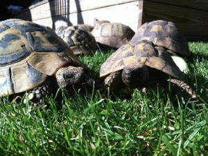 How To Keep A Happy And Healthy Tortoise